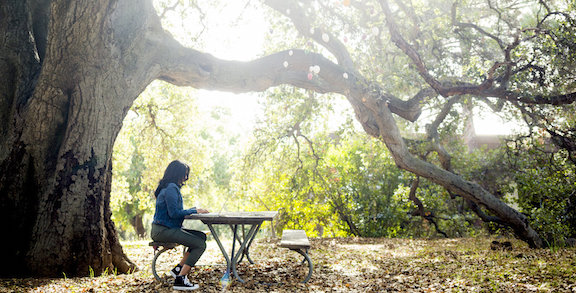 Student studying under oak tree