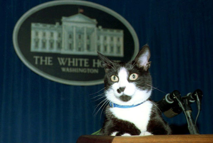 cat at podium